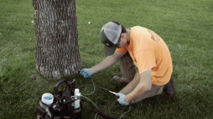 Emerald Ash Borer treatment injection
