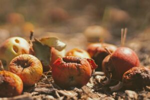 Protect your home apple trees from bugs and wildlife - Pro Tree