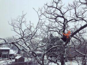 Winter tree trimming in Minnesota