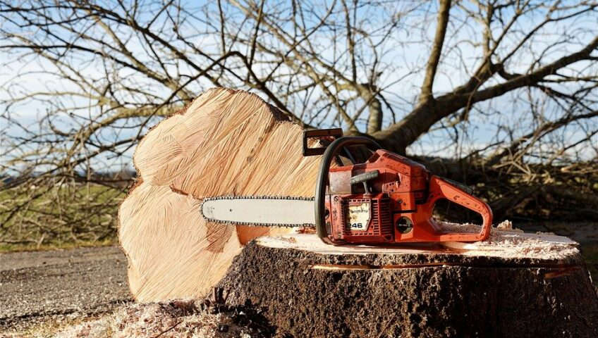 winter tree care services in MN