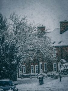 winter tree damage protection